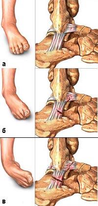 биомеханика височнонижнечелюстного сустава
