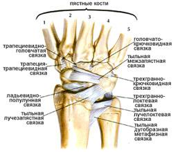 межфаланговые суставы кисти связки