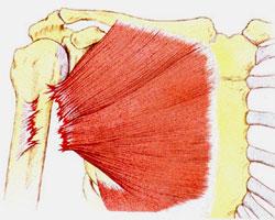 Что делать при растяжении грудной мышцы? Растяжение грудной мышцы у женщин симптомы и лечение